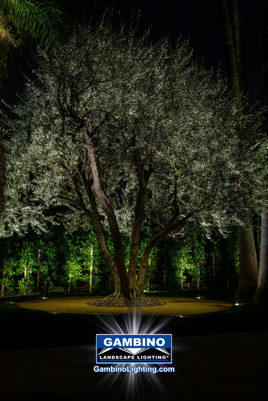 Gambino landscape lighting high quality prospective clients for streit olive tree aloadofball Images