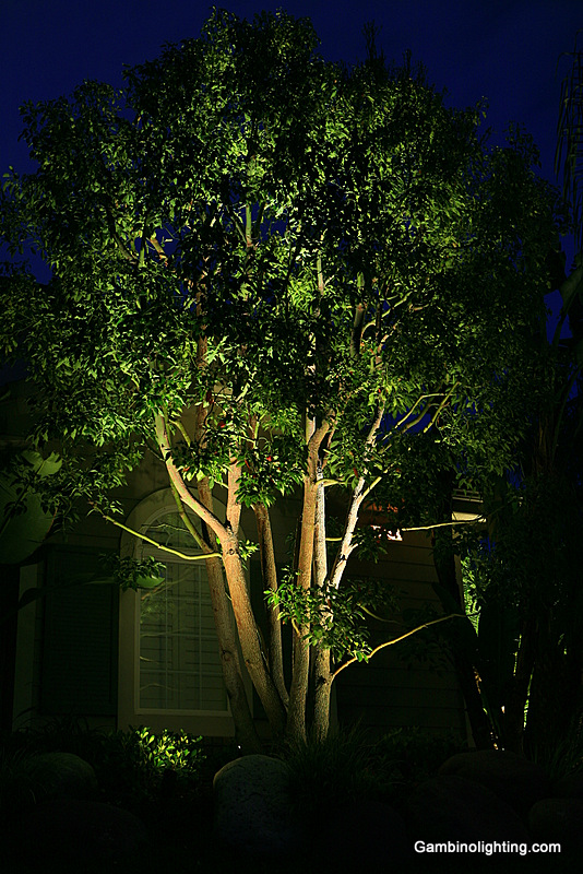 This camphor tree has 3 carefully selected fixtures and lamps placed strategically within under planted shrubs effectively creating a high lighted focal point